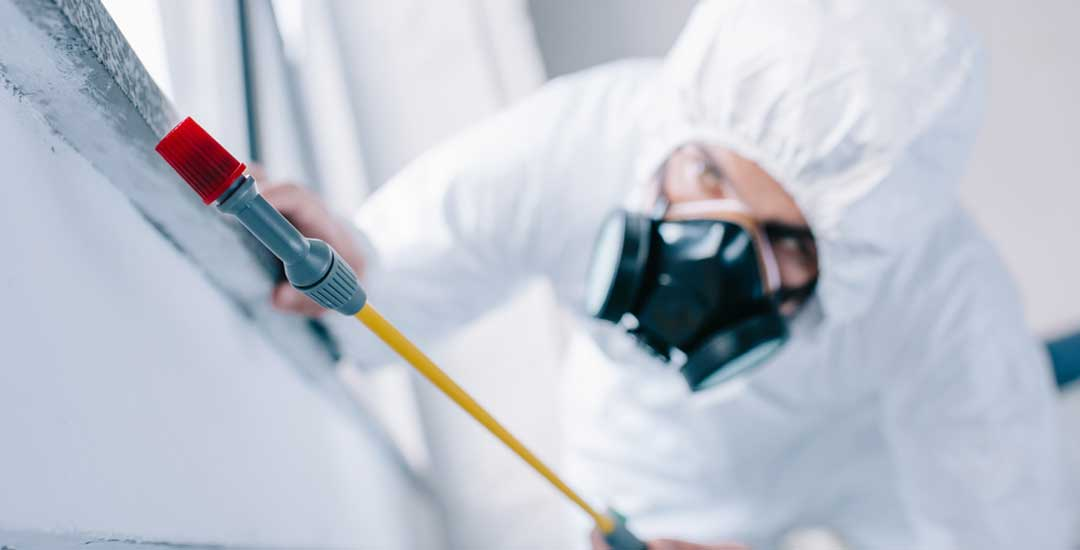 Killing bed bugs with chemicals